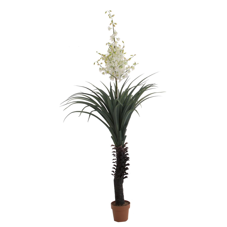 1539-planta-yucca.jpg