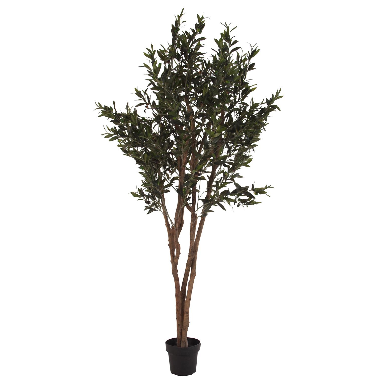 1545-planta-olivo.jpg